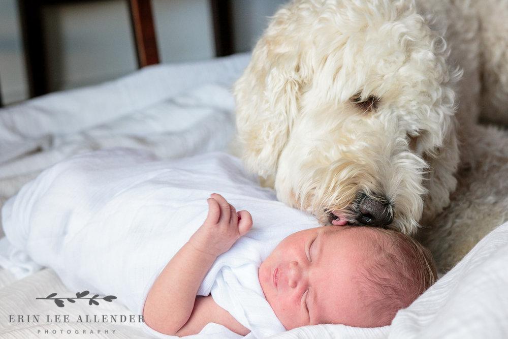 newborn_with_her_dog