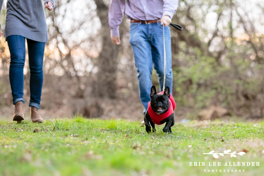Frenchie_Running