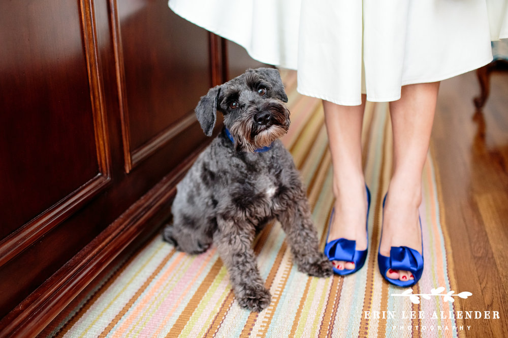 Kate_Spade_Shoes_&_Dog