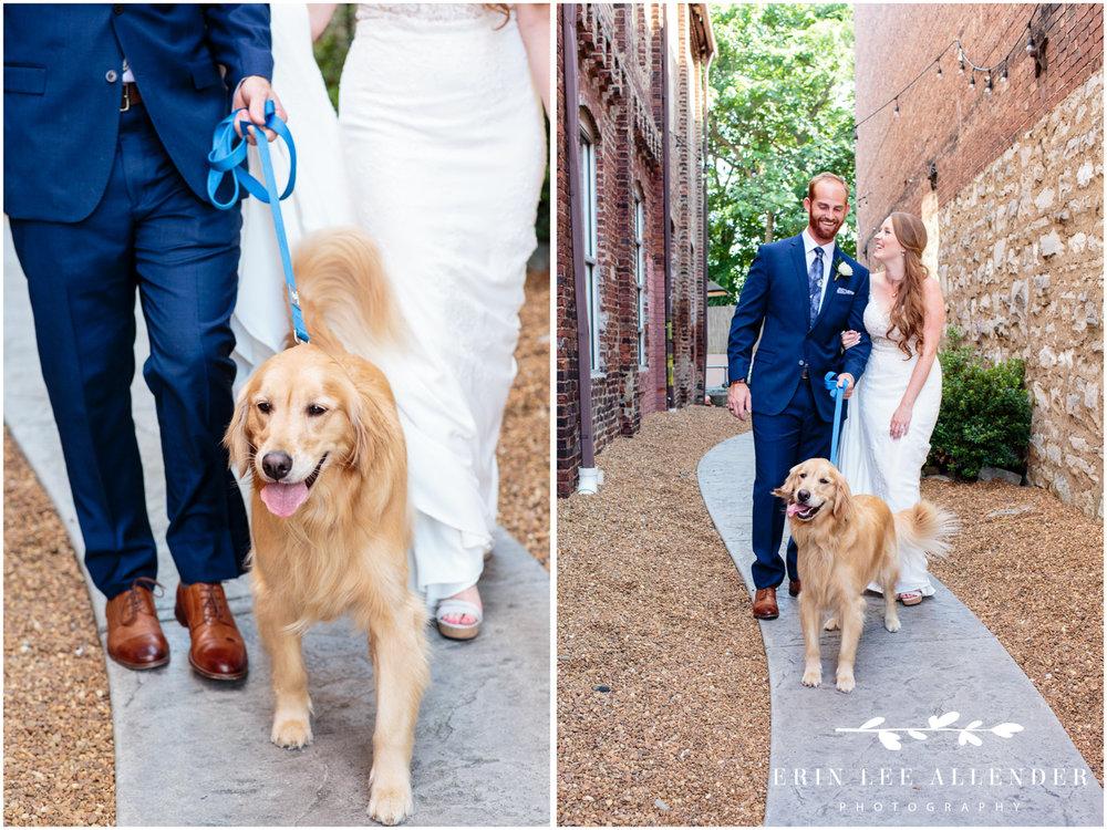 Golden_Retriever_At_Wedding