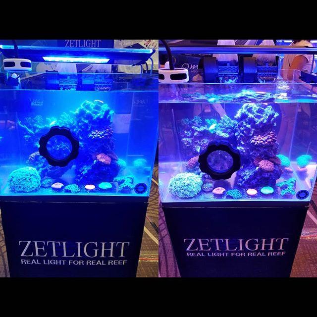 Before and after pictures from @zetlightgroup booth at @reefapalooza_orlando using Kolar Premium Carbon. #aquarium #reefaquarium #reeflife #allmymoneygoestocoral #marineaquarium #plantedaquariums #reeftank #reef2reef #saltwatertank #saltwateraquarium #saltwatertank #fishtank #reefcentral #eatsleepreef #reefpack#reef #aquariums #bestaquarium #aquariumhobby #reeftanks #ocean #kolarlabs #kolar #activatedcarbon #carbon