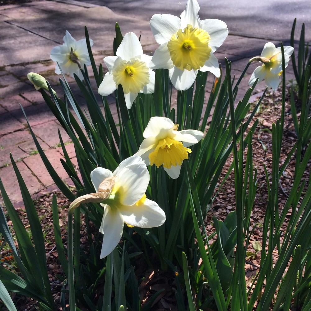 Clarkson_Garden_2.jpg