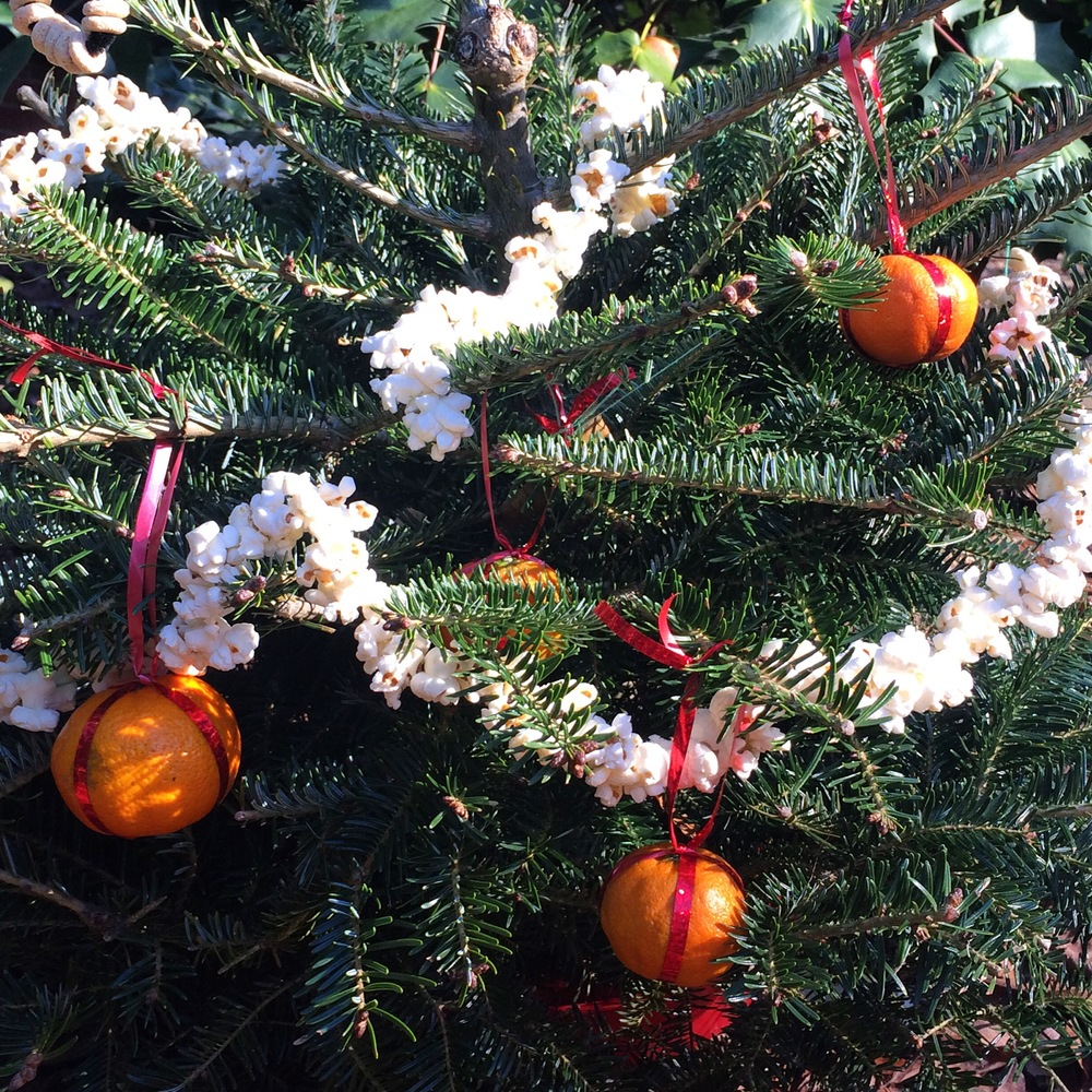 Holiday Trees for Wildlife 2015! See more