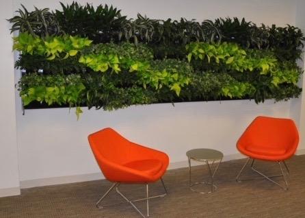 Living Plant Wall 1a JPG.jpg