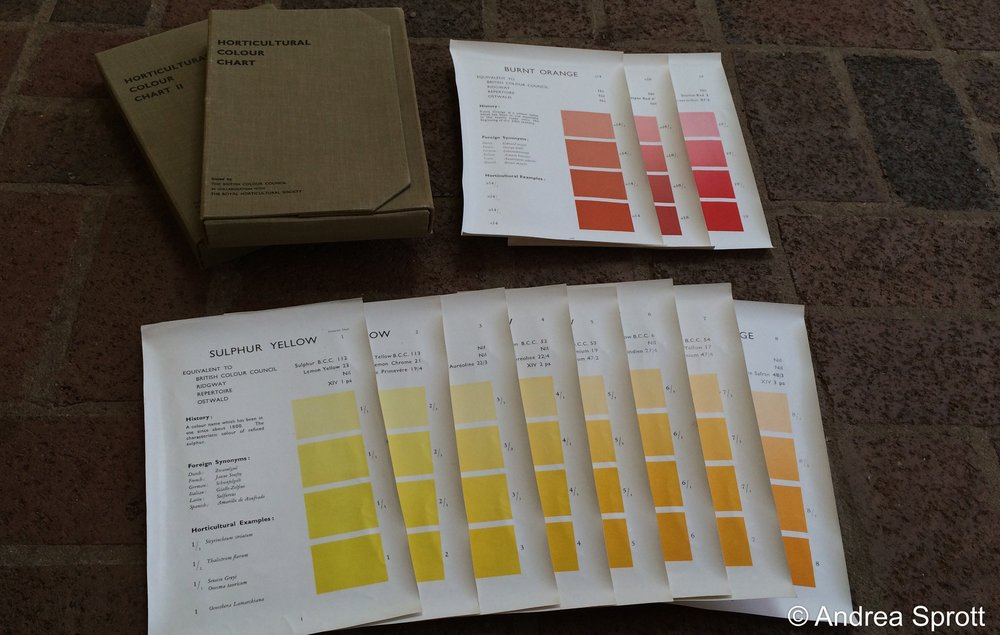 "Robert F. Wilson's ""Horticultural Colour Chart""… who uses color charts anymore? A garden curator desperately seeking the positive identity of plants in the 1/3 acre garden in which she works… that's who!"