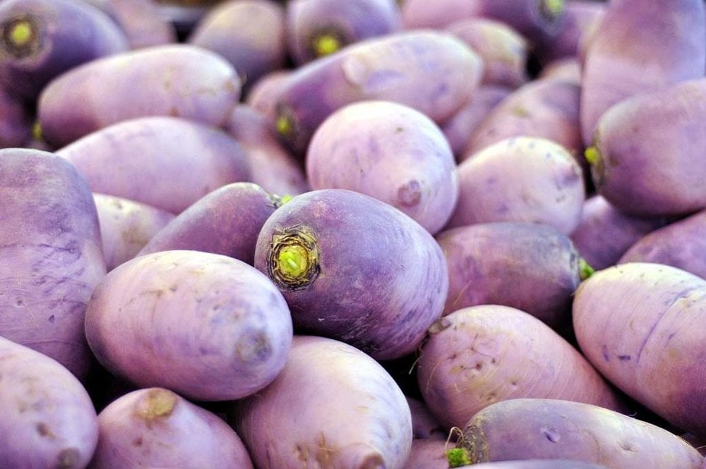 The Purple Muu radish is also known as a Korean, Lo Bok, and Moo radish. Like a Daikon, it is larger than most other radishes and is mild with a hint of spice. The flesh is a light, creamy purple. Eaten raw, the Mu radish is rife with fiber, vitamin C, and carotene. But it's most commonly used as the key ingredient for Kimchi, a spicy, fermented slaw, which is said to aid in digestive health. Try your hand at homemade Kimchi or simply toss with apple cider vinegar that adds a subtle tanginess. Click through for recipe ideas!