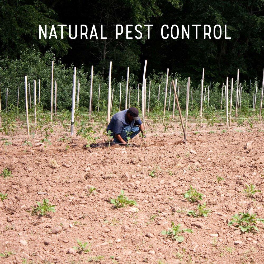 Natural Pest Control Square.jpg