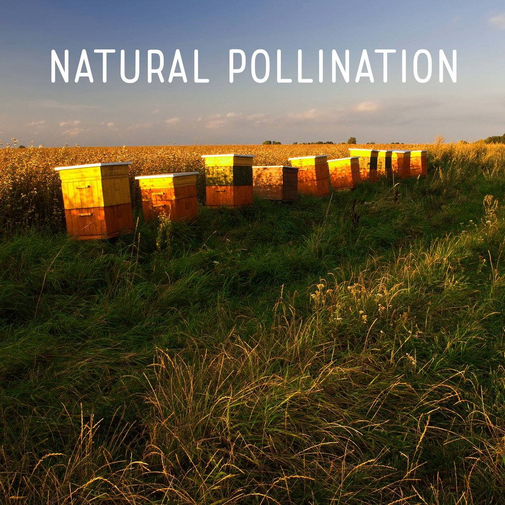 Natural Pollination Square.jpg