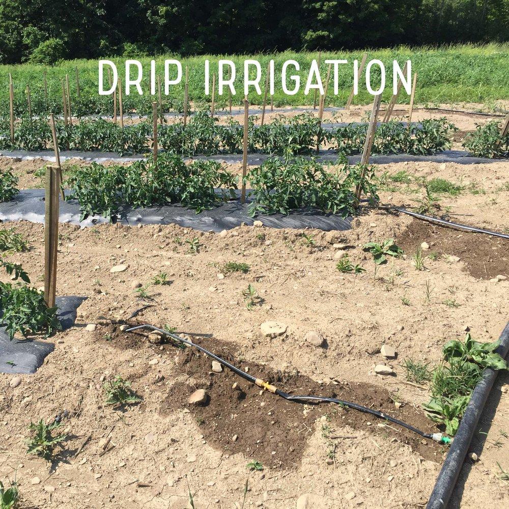 Drip irrigation square.jpg