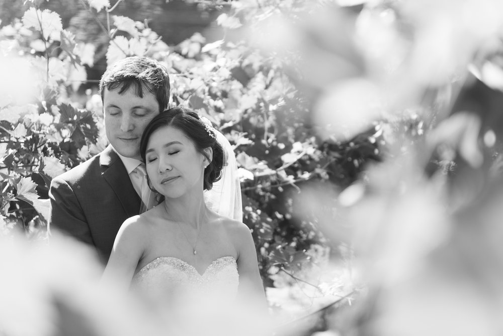 Black and white of the bride and groom embracing surrounded by vines at veritas vineyard near charlottesville, virginia