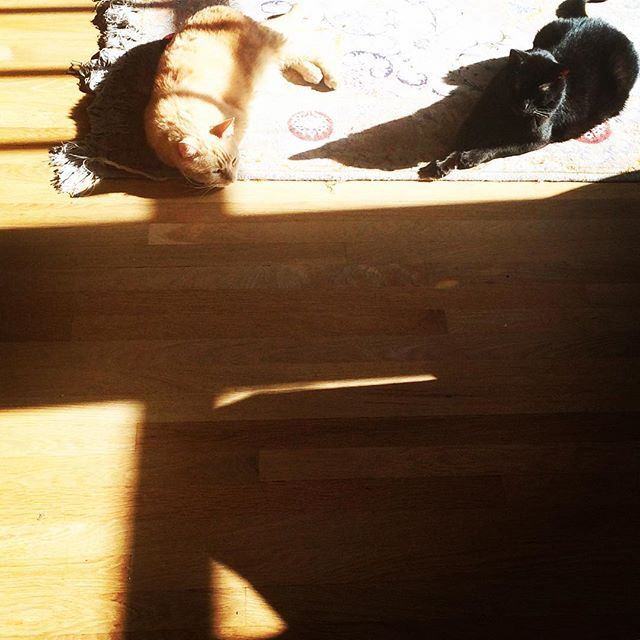 Happy Caturday everyone!! #sunlovers #goodlife #catnap #sunshine #followthesun