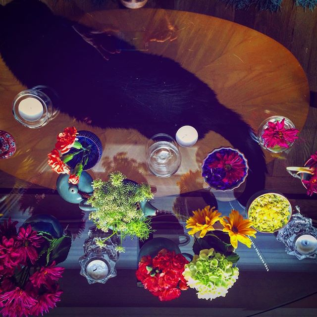 A few of my favorite  things.#whiskersonkittens #flowers #tea #home