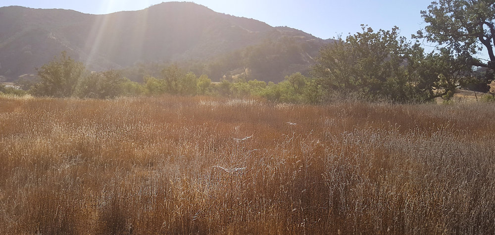 fieldcrop.jpg