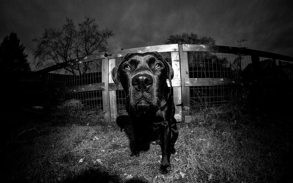 20190106_cromwell_valley_park_rokinon_8mm_fisheye 008.jpg