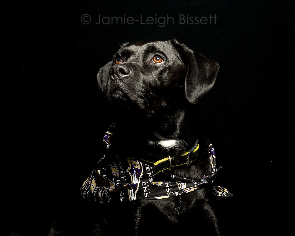 baltimore-pet-portraits-jamie-leigh-bissett-2.jpg