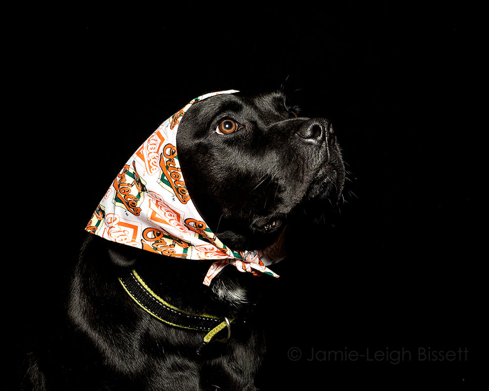 baltimore-pet-portraits-jamie-leigh-bissett.jpg