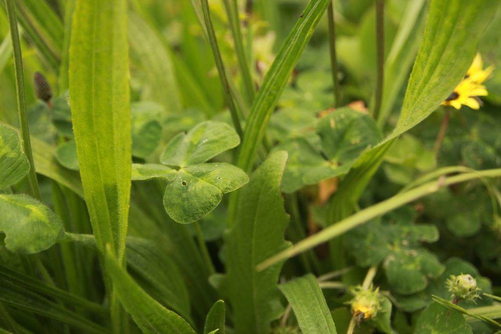 Grass18