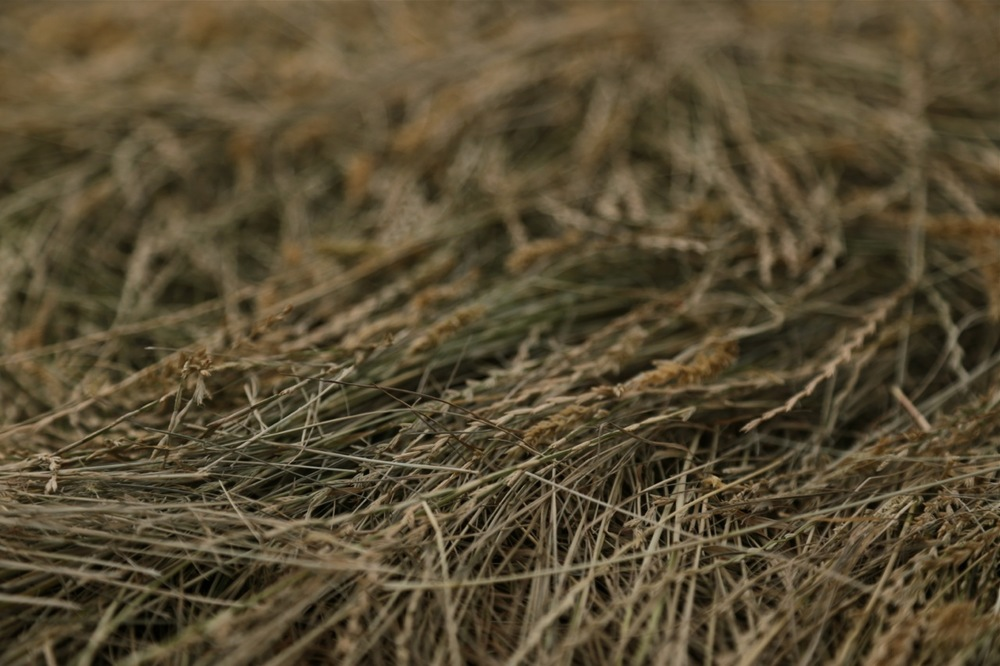 haycutting07