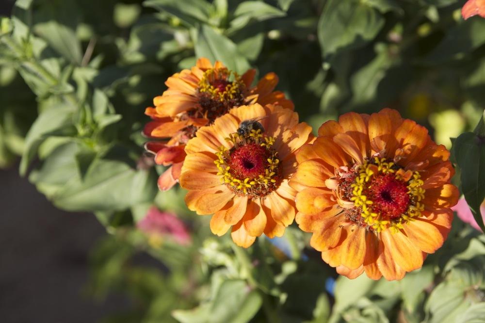 autumn garden10