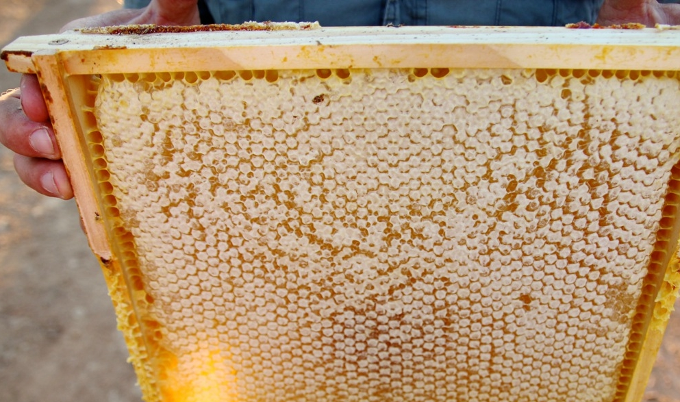 Cold-Pressed Raw Honey