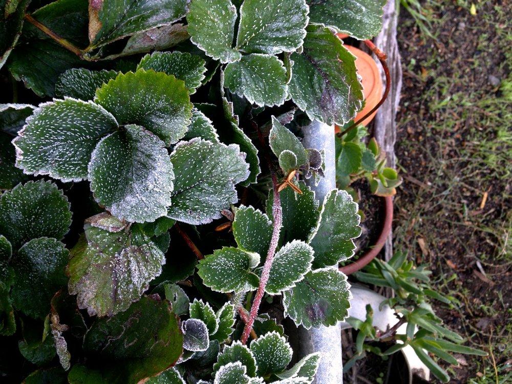 wintering01.jpg