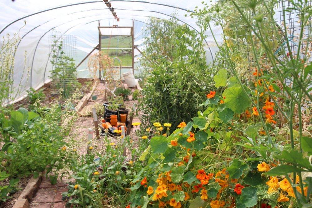 garden05.jpg