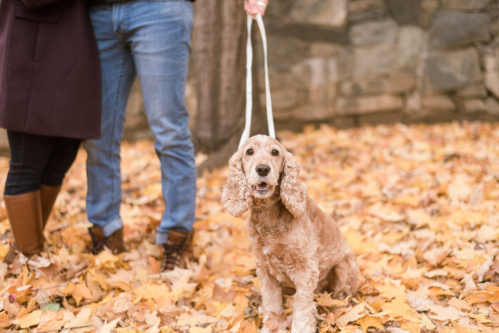 MD-Great-Falls-Engagement-Session-With-Dog-Fall-Foliage-15.jpg