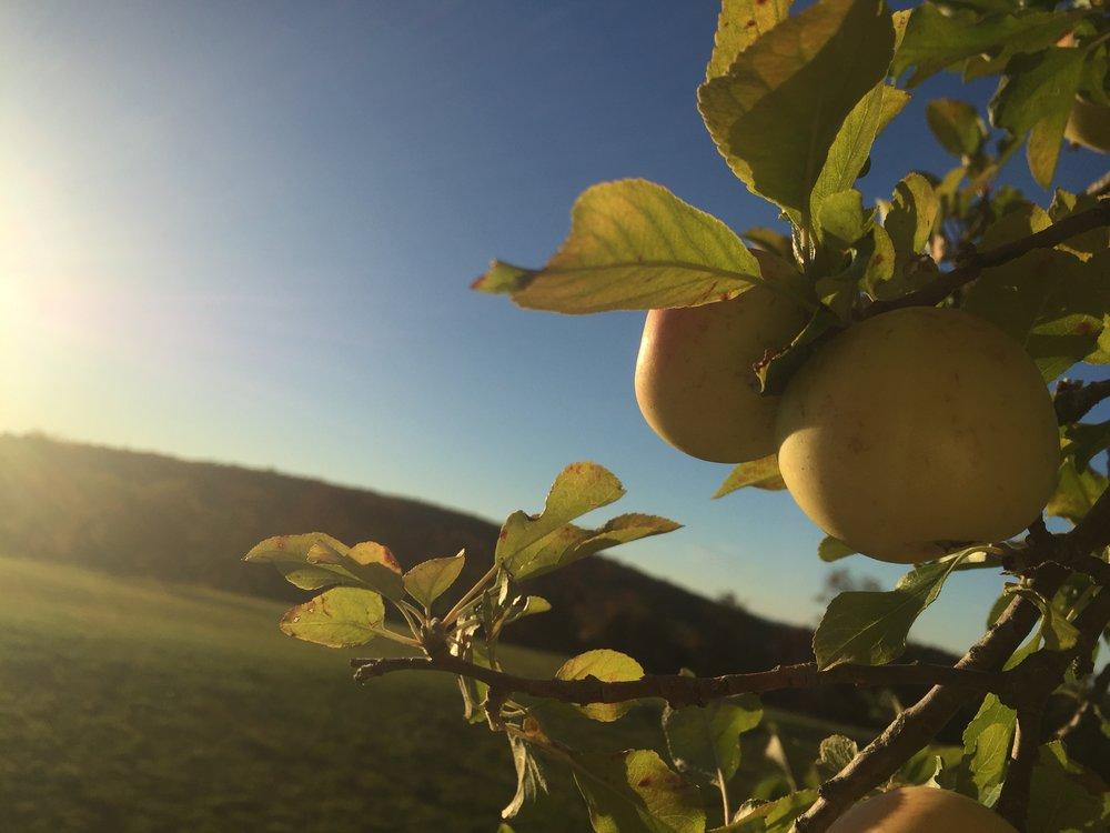 Sunny Meadow Farm   66 Northrup Street  Bridgewater, CT