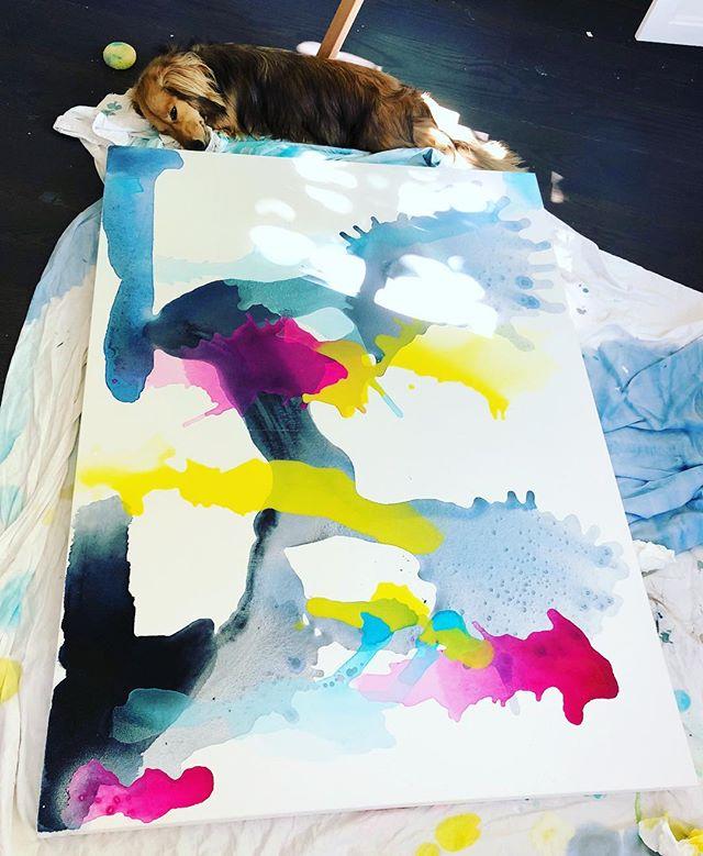 Studio dog ❤️