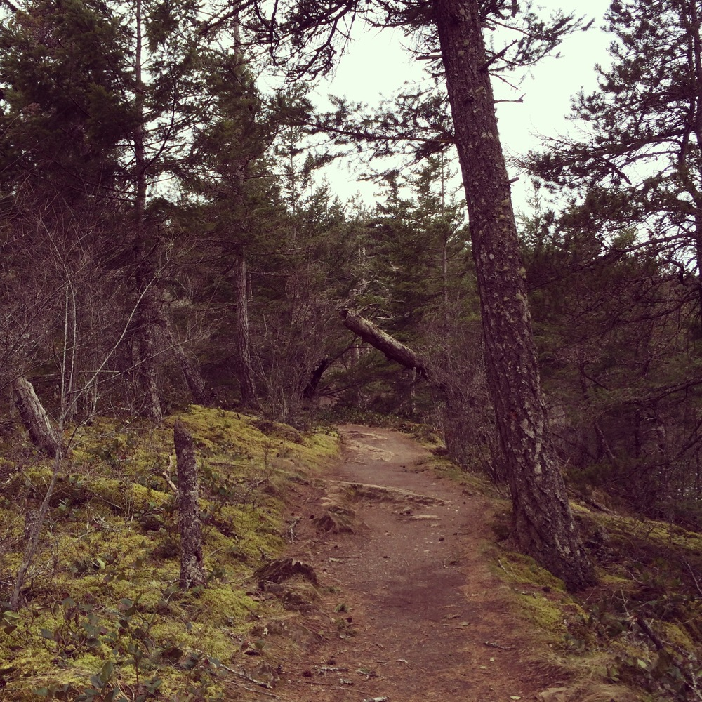Mountain Lake trail on Orcas Island, Washington - March, 2014