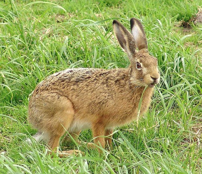 Haren får gärna finnas kvar. Men den hör hemma i naturen och bör portas från alla typer av allvädersbanor från och med nyss.