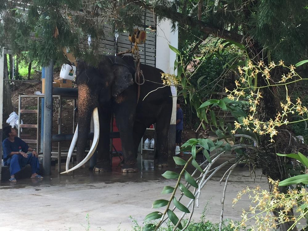 At the elephant hospital