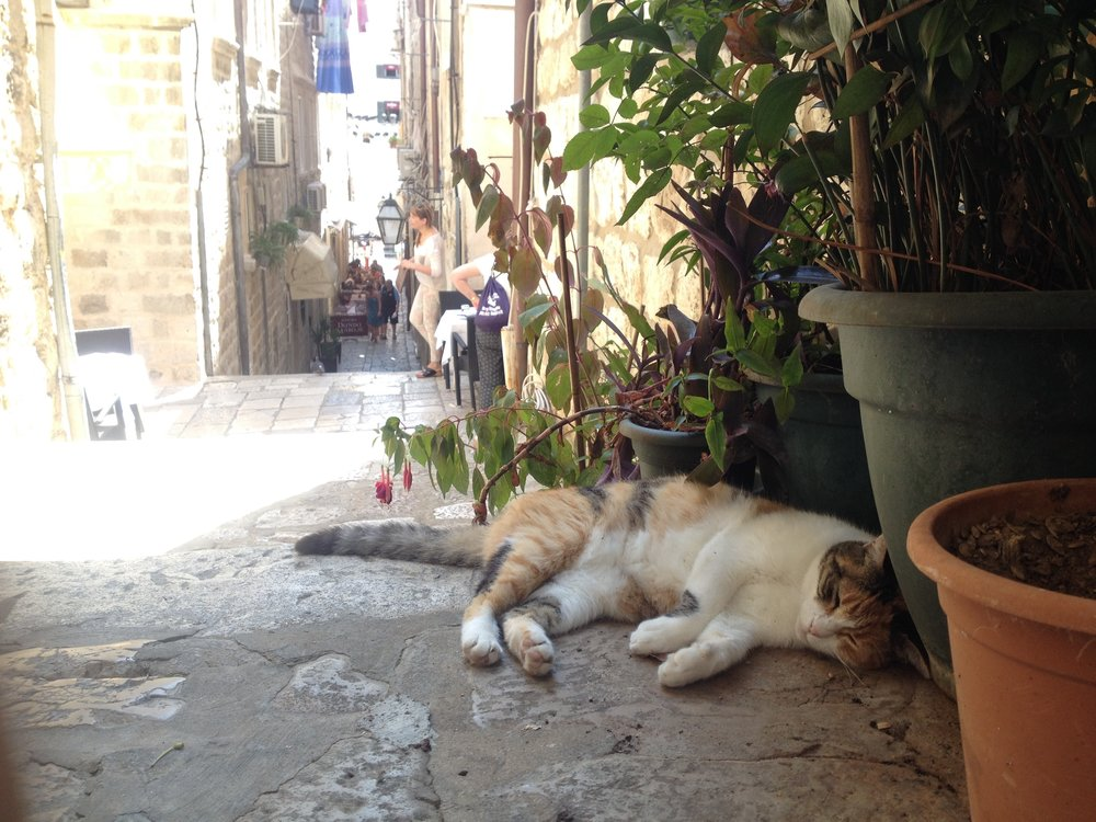 Cats are everywhere in Dubrovnik