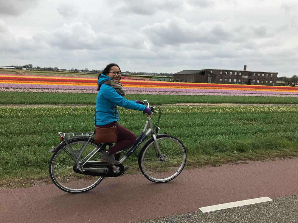 Cycle to the tulip fields