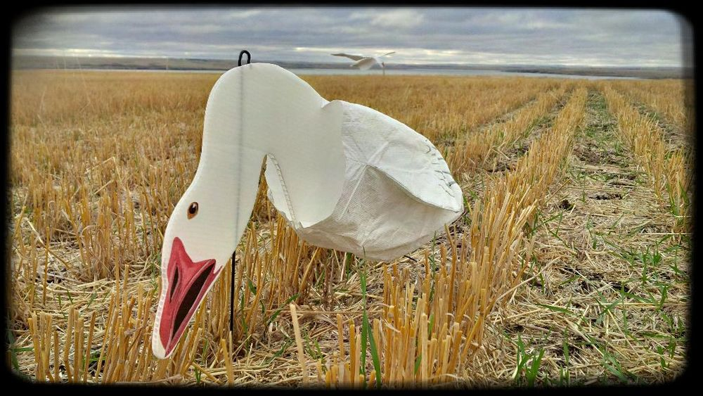 goose-decoy1.jpg