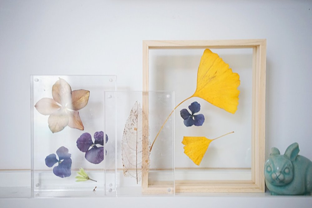 pressed flowers — the absolute everything