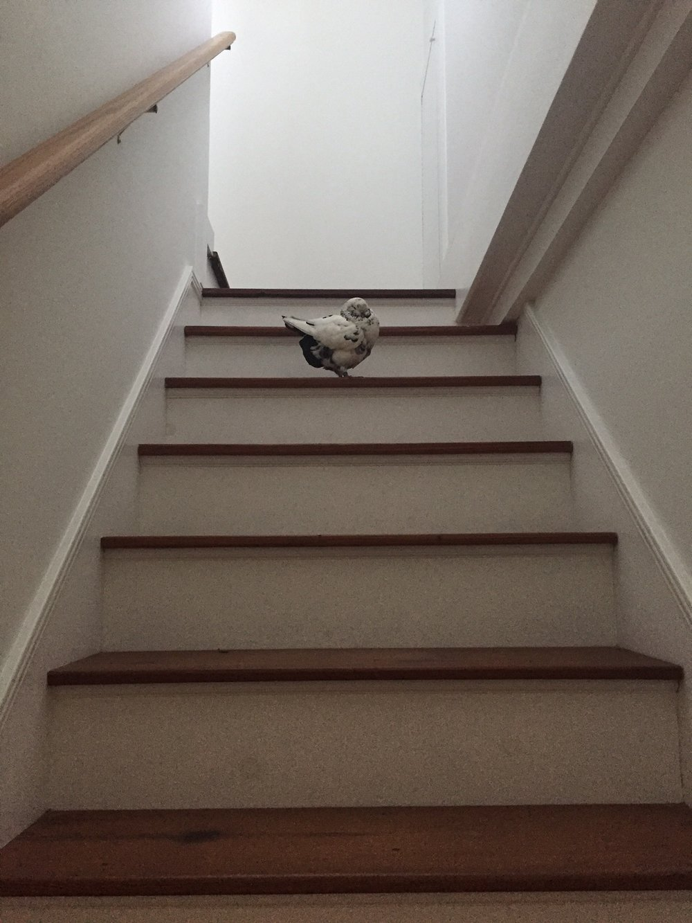 Pearl figured out how to climb the stairs. Smart girl!