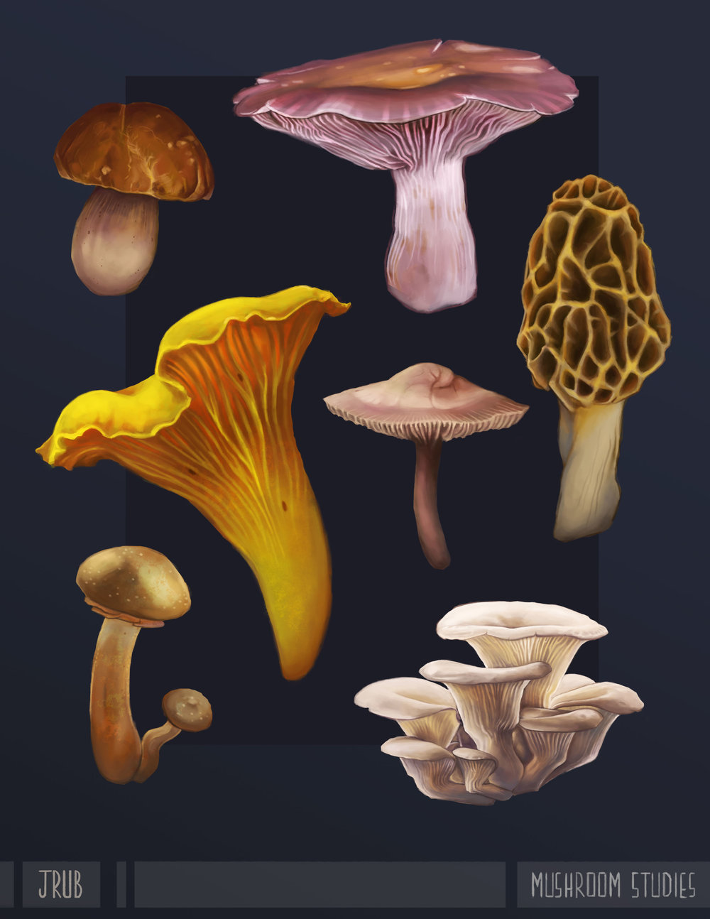 Studies of mushrooms that could be found among the burrows.From top-left: Cep, Blewit, Chanterelle, Fairy Ring, Morel, Armillaria, and Oyster.