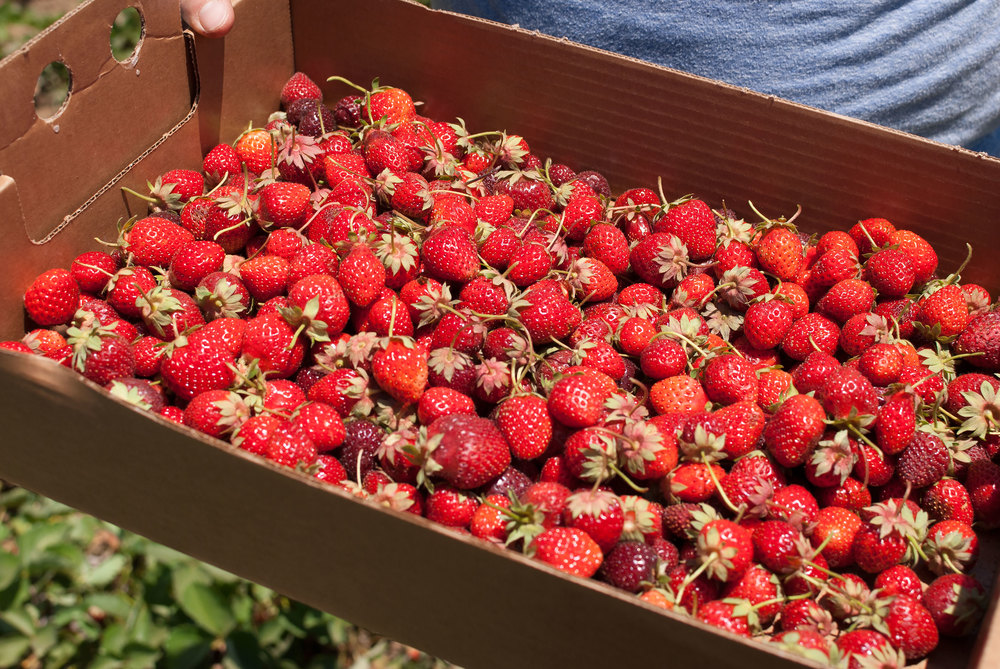 strawberry-jam_021.jpg