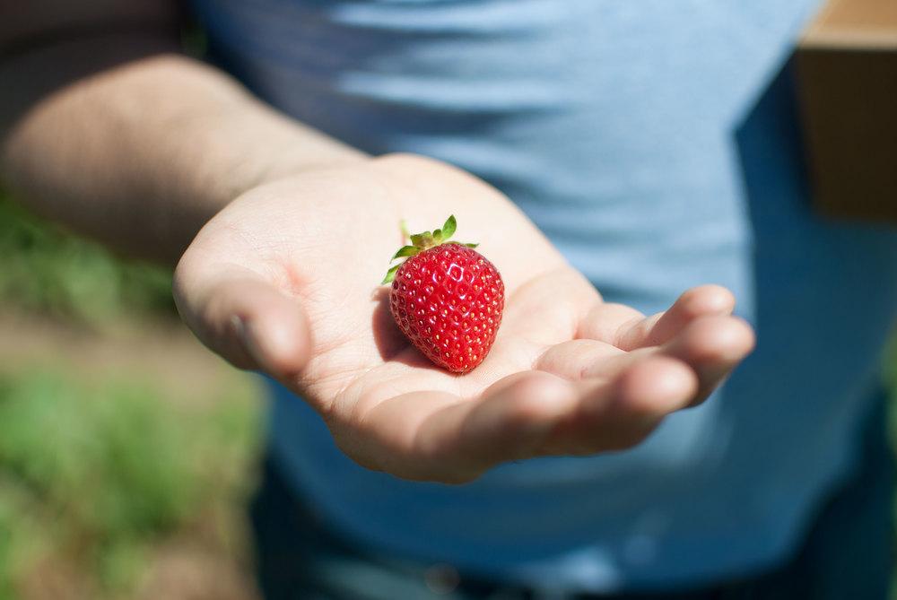 strawberry-jam_03