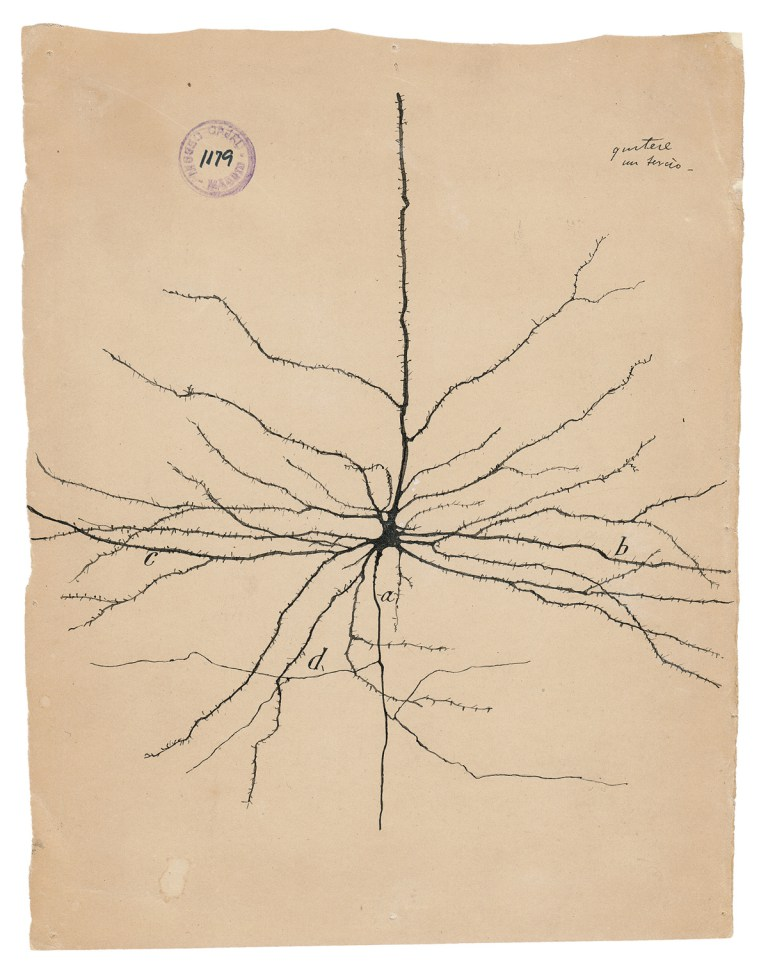 The pyramidal neuron of the cerebral cortex. The Beautiful Brain (2017) - Drawing by Santiago Ramón y Cajal.