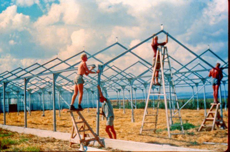 Holländische Experten bauen Glashäuser in Nes Ammim – und im ganzen Land. Nes Ammim hat Glashäuser in Israel eingeführt!