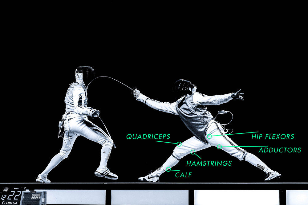 Diagram of the muscles used to successfully decelerate after a fencer's lunge