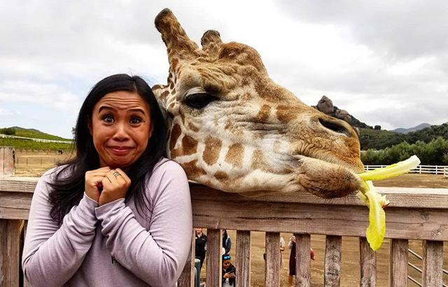 Happy birthday @karissaysonmba ❤ hanging with #stanleythegiraffe @malibusafaris