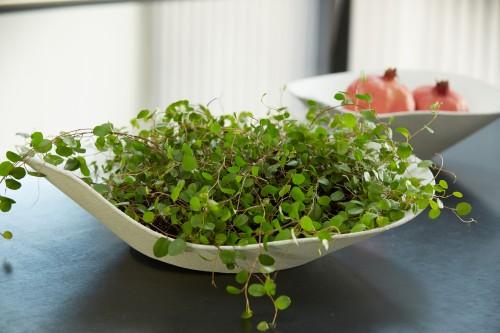 Vietnamese bowl