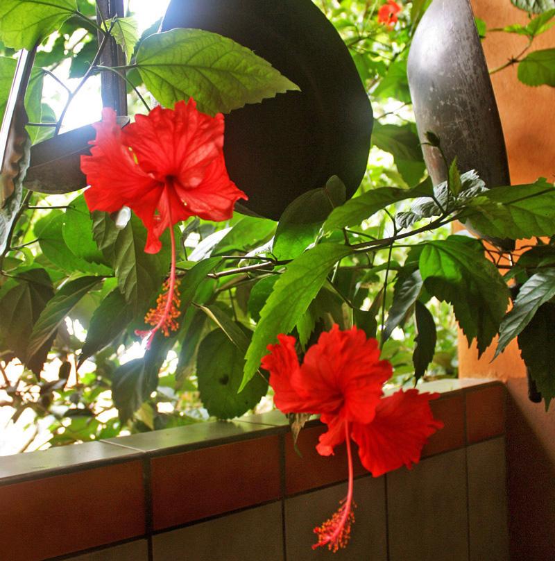 Hibiscus Drinks Keto Recipes