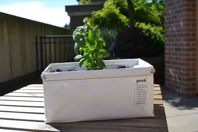 Let's Patch self-watering planters | The Life Delicious