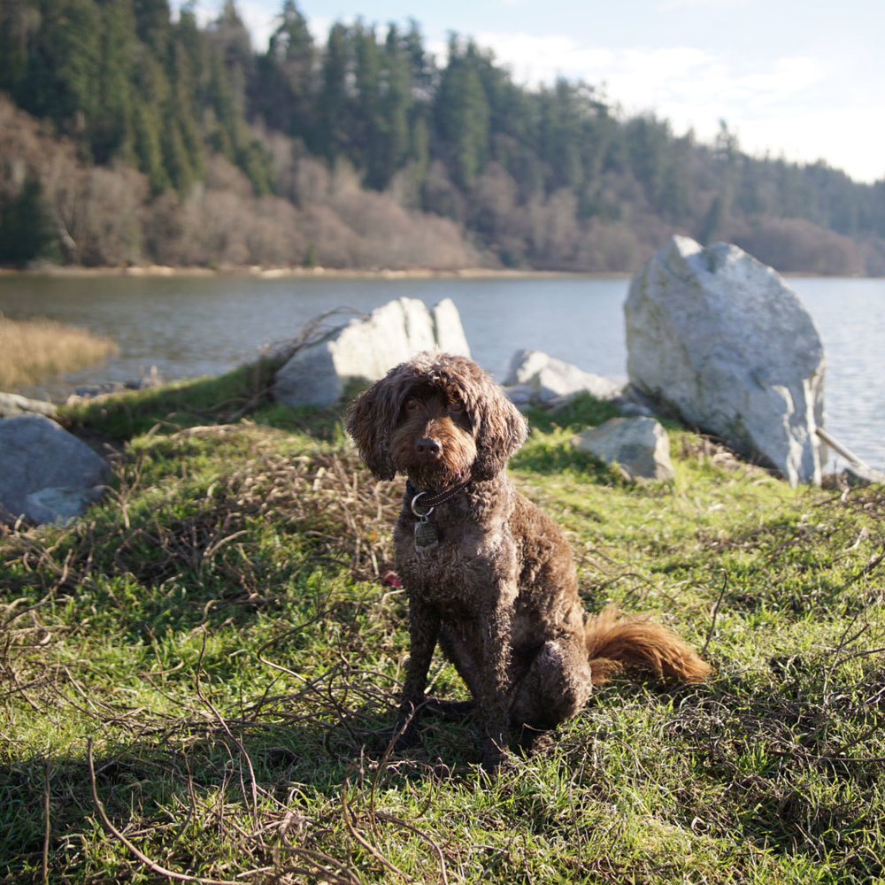 MOVEMENT >>> My 5 favourite off-leash walks in Vancouver! It's so important for Charlie dog to have a daily off-leash romp but I'm not one for standing around the dog park – I want to get a workout too! ⁣⠀⠀⠀⠀⠀⠀⠀⠀⠀ ⁣⠀⠀⠀⠀⠀⠀⠀⠀⠀ These are my top 5 picks in Vancouver:⁣⠀⠀⠀⠀⠀⠀⠀⠀⠀ ⁣1.  Wreck Beach , pictured (October 1 to February 28): The stairs! The sand! The scenery! So much fun to run and play! ⁣⠀⠀⠀⠀⠀⠀⠀⠀⠀ ⁣2.  Pacific Spirit Regional Park : #ForestBathing at its best. ⁣⠀⠀⠀⠀⠀⠀⠀⠀⠀ ⁣3.  Spanish Banks : I like to start at far west, at the dog beach, and head east so that if we feel like walking further (you can go for hours along the seawall, to Locarno Beach, Jericho Beach, Kits beach, Granville Island, etc) Charlie dog is nice and tired when it's time to put him on-leash at the end of the off-leash area.⁣⠀⠀⠀⠀⠀⠀⠀⠀⠀ ⁣4.  Charleson Park : A walking path for humans, a huge field for canines, and a secret waterfall!⠀⠀⠀⠀⠀⠀⠀⠀ ⁣5.  Devonian Harbour Park : Same deal as Spanish Banks – there's an off-leash area you can walk through on your way around Stanley Park's gloriously gorgeous seawall. ⁣⠀⠀⠀⠀⠀⠀⠀⠀⠀ ⁣⠀⠀⠀⠀⠀⠀⠀⠀⠀ For more:  https://vancouver.ca/parks-recreation-culture/dog-off-leash-areas.aspx
