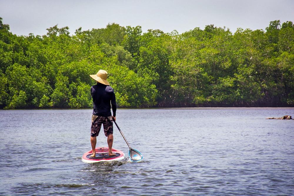 Standup paddleboarding on the mangroves
