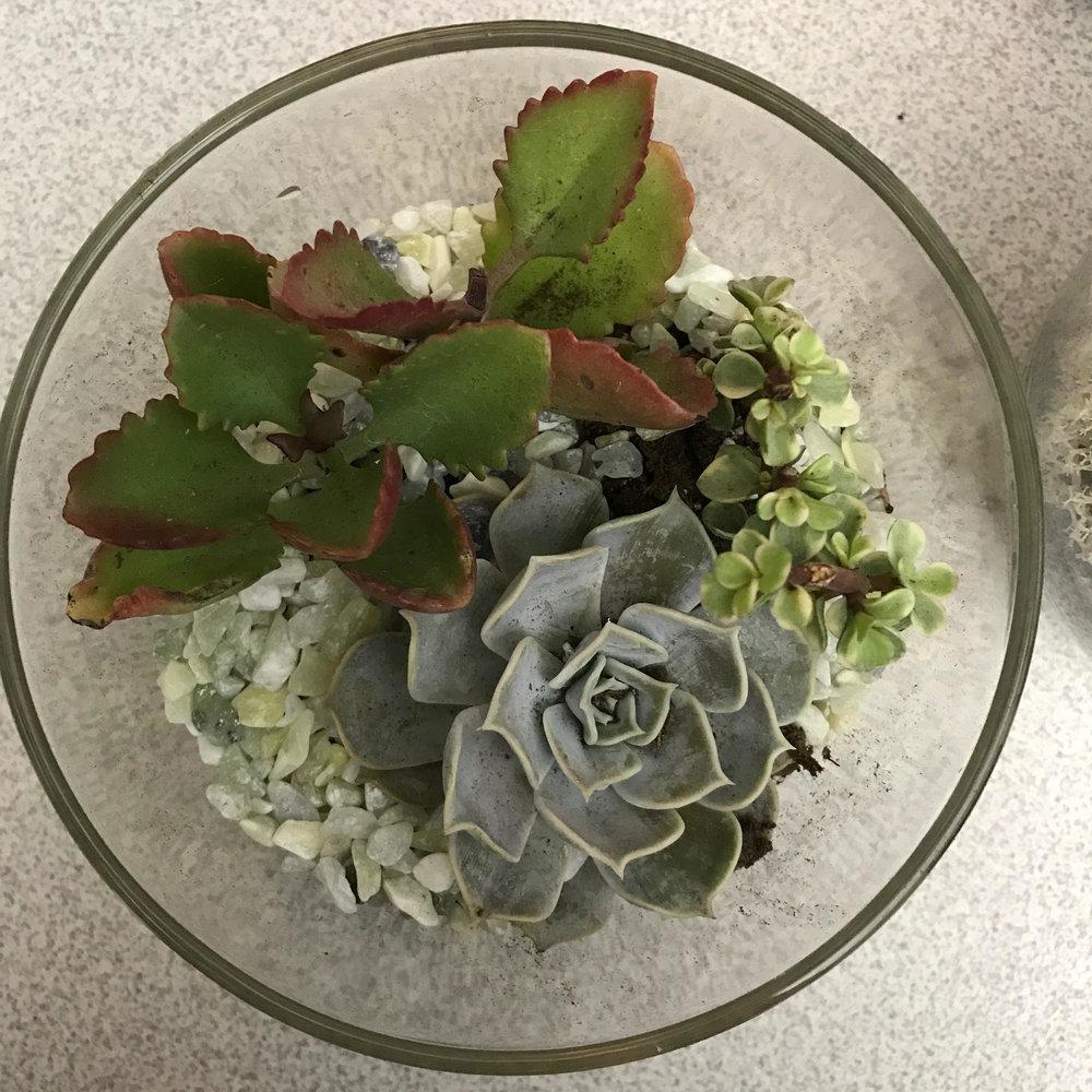 Terrarium_DIY_succulent.jpg